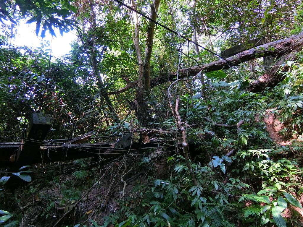 白毛山廢棄保線吊橋