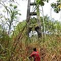人和波石吊橋(人和村)