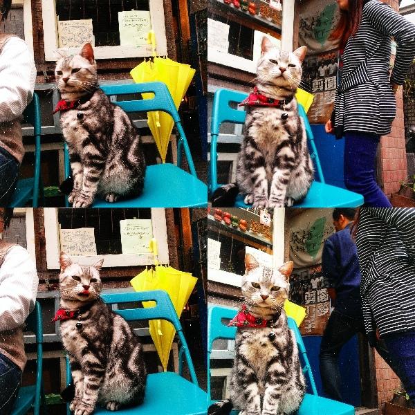 貓廬與西堤