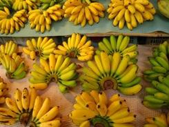 6-5-26 香蕉_s.jpg