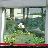 台北市立動物園~大貓熊「團團」