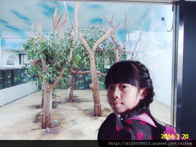 台北市立動物園:無尾熊館+可愛動物區