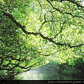 四草大眾廟~紅樹林「綠色隧道 」