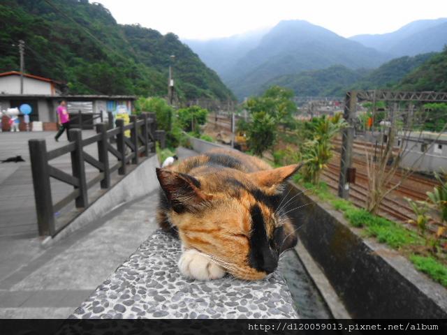 平溪線系列 - 猴硐貓村