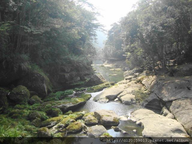 2018杉林溪 - 櫻姿花傳