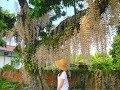 白河 赤中寺- 石斛蘭的影片