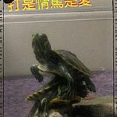 2015-11-19_22.24.32.jpg-2060651179