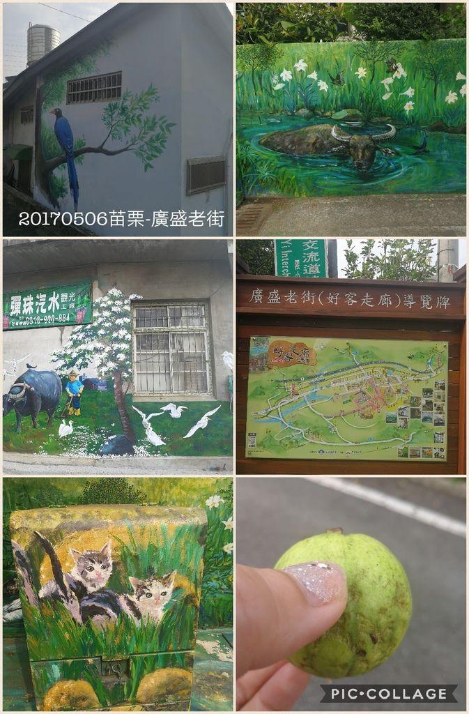 Collage 2017-05-06 09_02_48.jpg