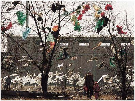 Plastic Bags On the Tree In China.JPG