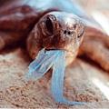 plasticbag-turtle-web.jpg