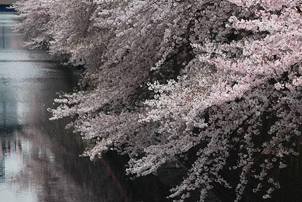 IMG_6695_副本.jpg