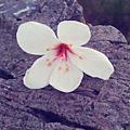 IMAG0115_1