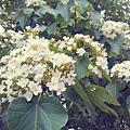 IMAG0119_1
