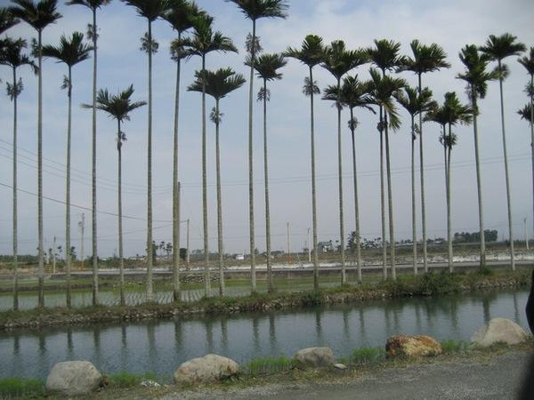 米舖前的田園小路
