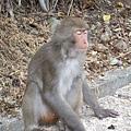哈哈猴子也有照相閉眼的困擾