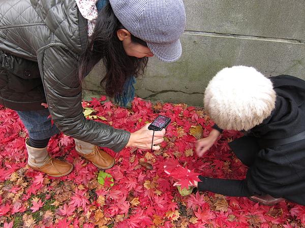 紅葉讓大家玩很久