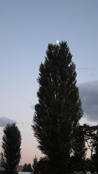 找到社團了。也找到半顆月亮在大樹上。
