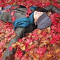 躺在滿滿的紅葉上喔