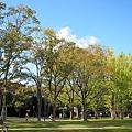 法學部外面的大樹