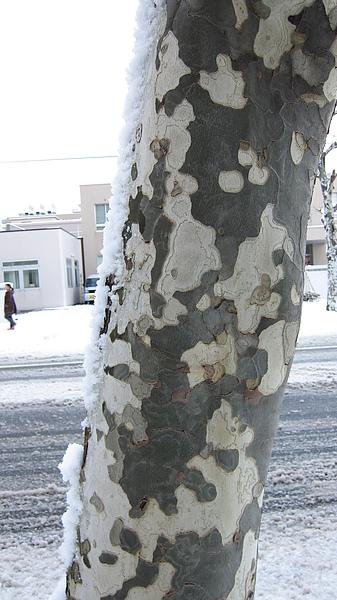 穿迷彩裝的樹