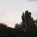 這天滿月,胖嘟嘟又黃澄澄,雖然我的相機照不出來