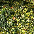 草地上的落葉與光影