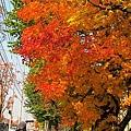 油畫感的紅葉