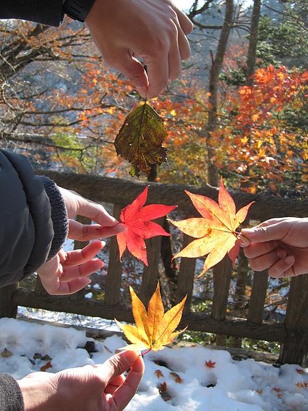 橋很久的葉子照的側拍(真正在照的是學姊)