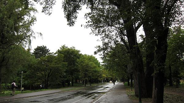 正在下雨的校園
