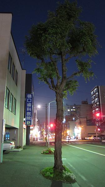 這棵樹照起來有超現實感