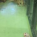 死雞與母獅的合照