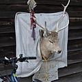 路上發現一個羊頭。還在徵名字...