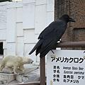北極熊與烏鴉,與黑熊的牌子