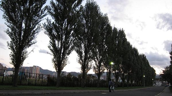 怡君好像說過喜歡這排大樹