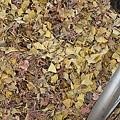 地上杏樹葉子現在的顏色
