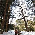 在北海道大樹下行走的我們