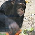 猩猩感覺過得很歡樂