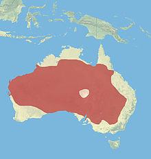 220px-Red_kangaroo.jpg