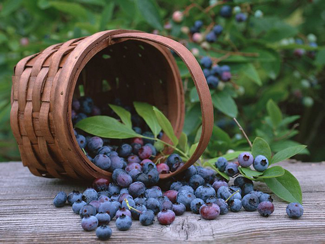 blueberry-basket