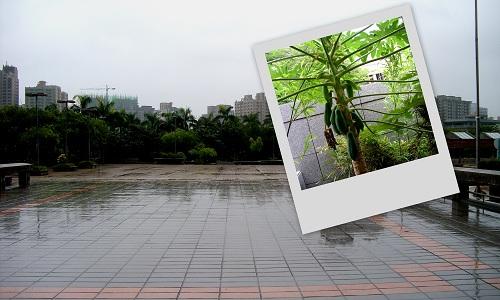 夏雨──高雄市立美術館(二)7
