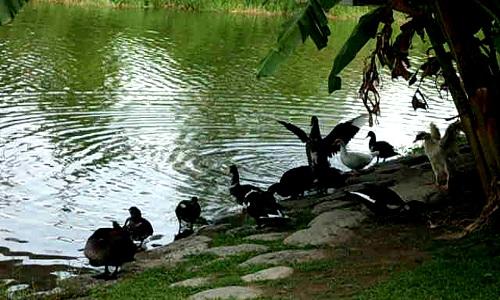 讓心回歸──中央公園5