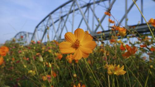 高雄市的最邊邊~浪漫的舊鐵橋溼地公園7