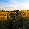 IMG_a5738