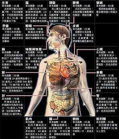 健康小知識 器官開始衰老歲數