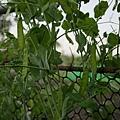 大好民宿-有機菜圃的擴充及成長