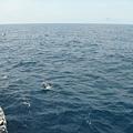 賞鯨Ⅰ_35.JPG