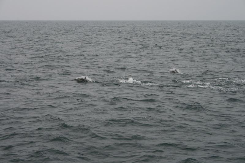 賞鯨Ⅱ_62.JPG