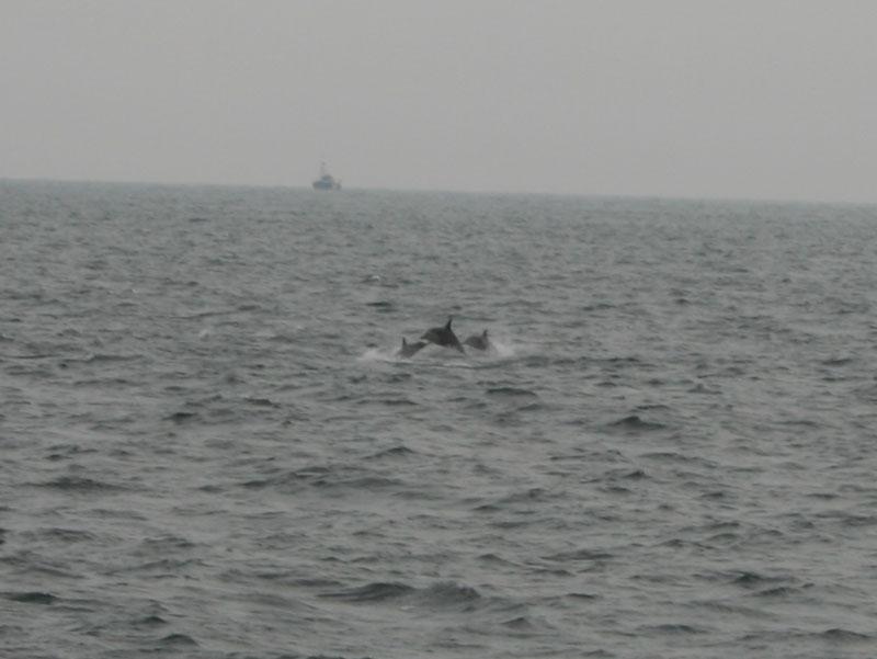 賞鯨Ⅱ_67.JPG