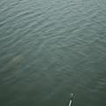林先生-釣魚05.JPG