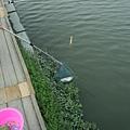 林先生-釣魚09.JPG